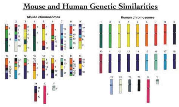Gener der går igen