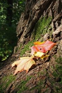 Nedfaldne blade der forbliver grønne