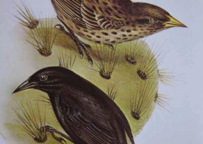 Finkene på Galapagos