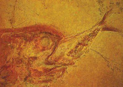 Fantastiske fossiler