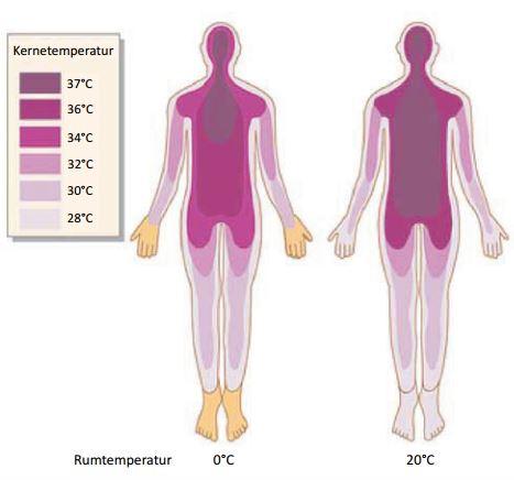 Kroppens temperaturregulering
