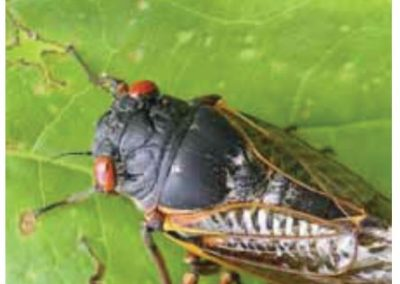 Insekt-aritmetik – helt genialt!