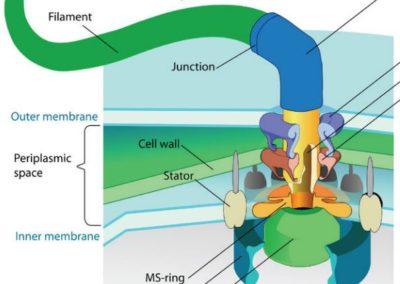 Cellen og dens 1000 motorer
