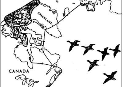 Trækfuglenes præstationer – et studie i udholdenhed