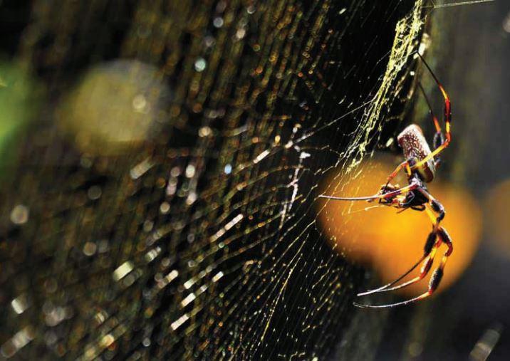 Eventyret om edderkoppen der vandt i lotto
