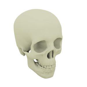 Kraniets udvikling