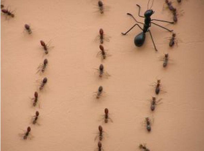 Management på myrens fodsti – Eller biologi og filosofi