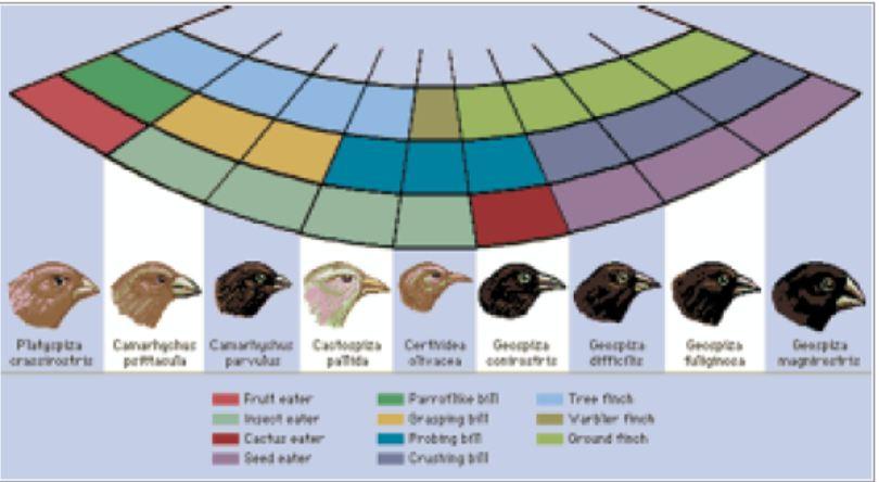 Hvem oppdaget Darwins finker?