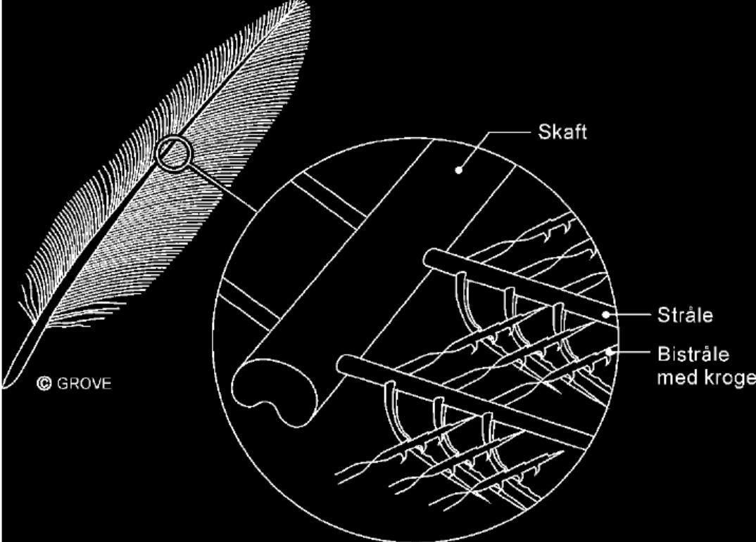 Fuglene et mysterium