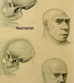 Viser genetisk forskel at neandertalerne og moderne mennesker ikke fik afko