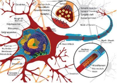 På jakt etter fornuft i hjernen