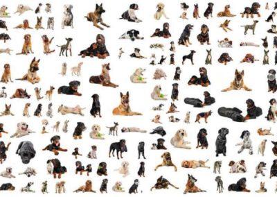 Evolution og evolution
