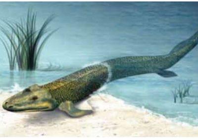 En håndgranat i tetrapodernes udvikling