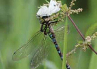 Kan der opstå nye arter?