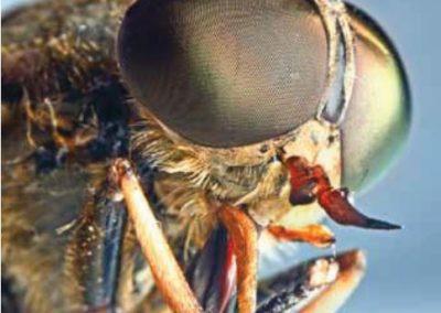 Insekternes evolution