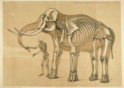 Kropsstrukturernes oprindelse