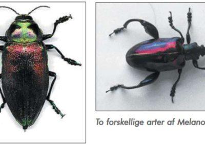 En fantastisk bille