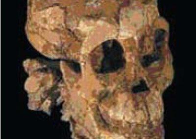 3.3 mio år barneskelet fundet