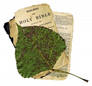 Religionen ud af biologitimerne