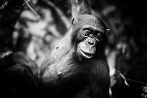Evolutionsteorien – en videnskabelig fejltagelse
