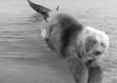 Når bjørner blir til hvaler